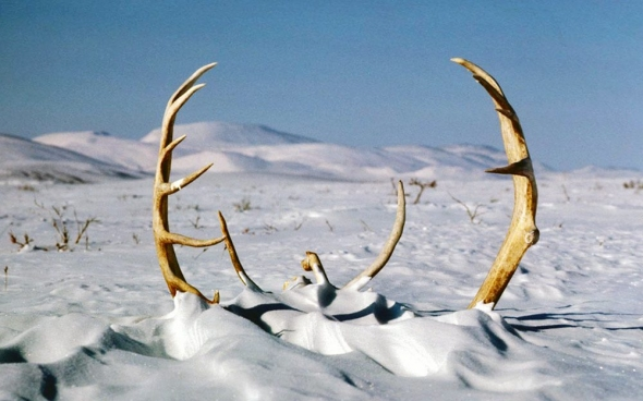 antlers-in-snow